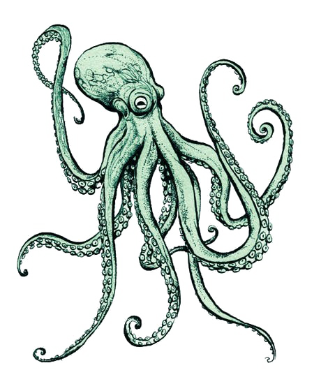 Octopus PNG File SVG Clip arts