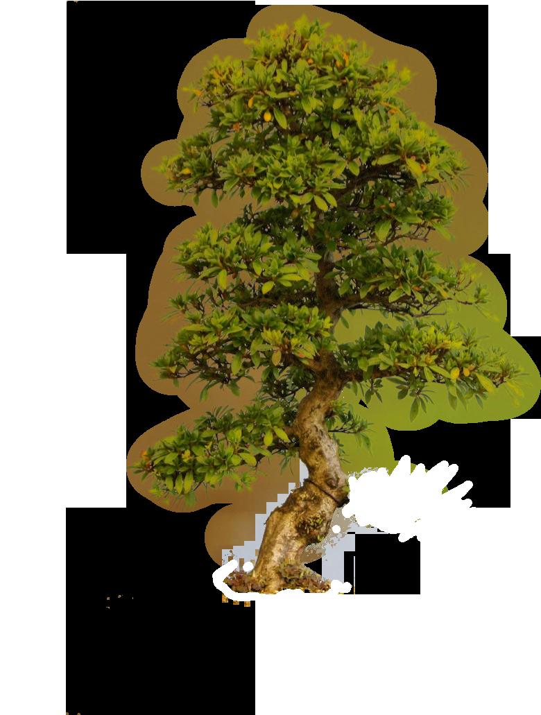 Old Tree PNG SVG Clip arts