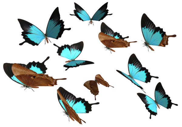 Peacock Royal Butterfly PNG SVG Clip arts