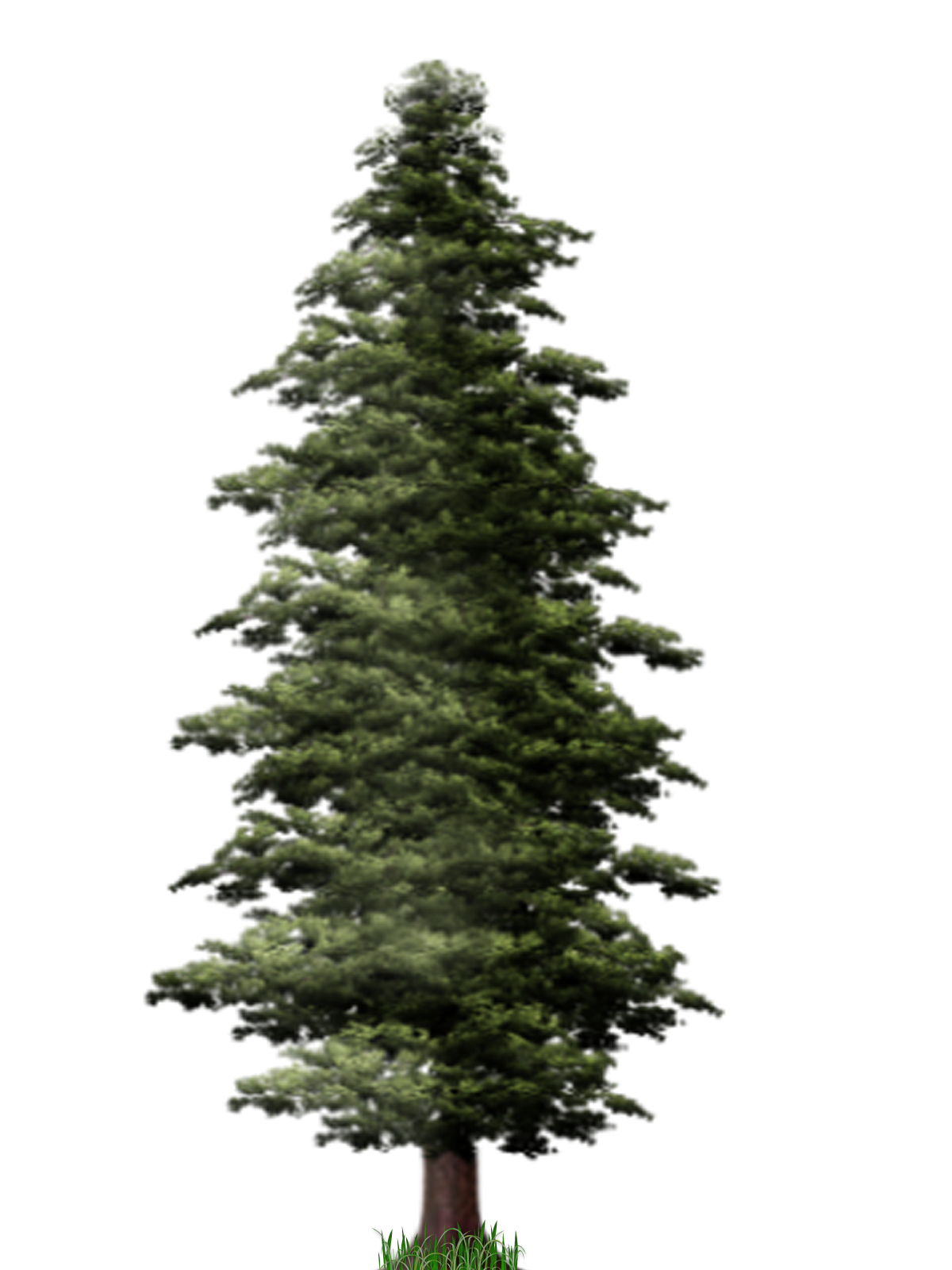 Pine Tree PNG File SVG Clip arts