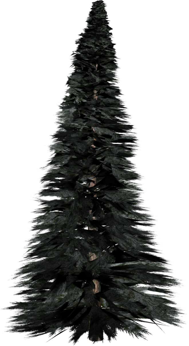 Pine Tree PNG Photos SVG Clip arts