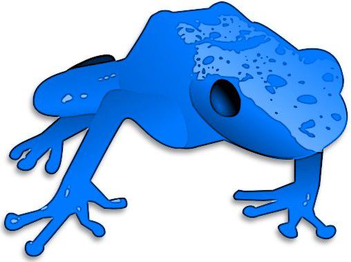 Poison Dart Frog PNG Transparent SVG Clip arts