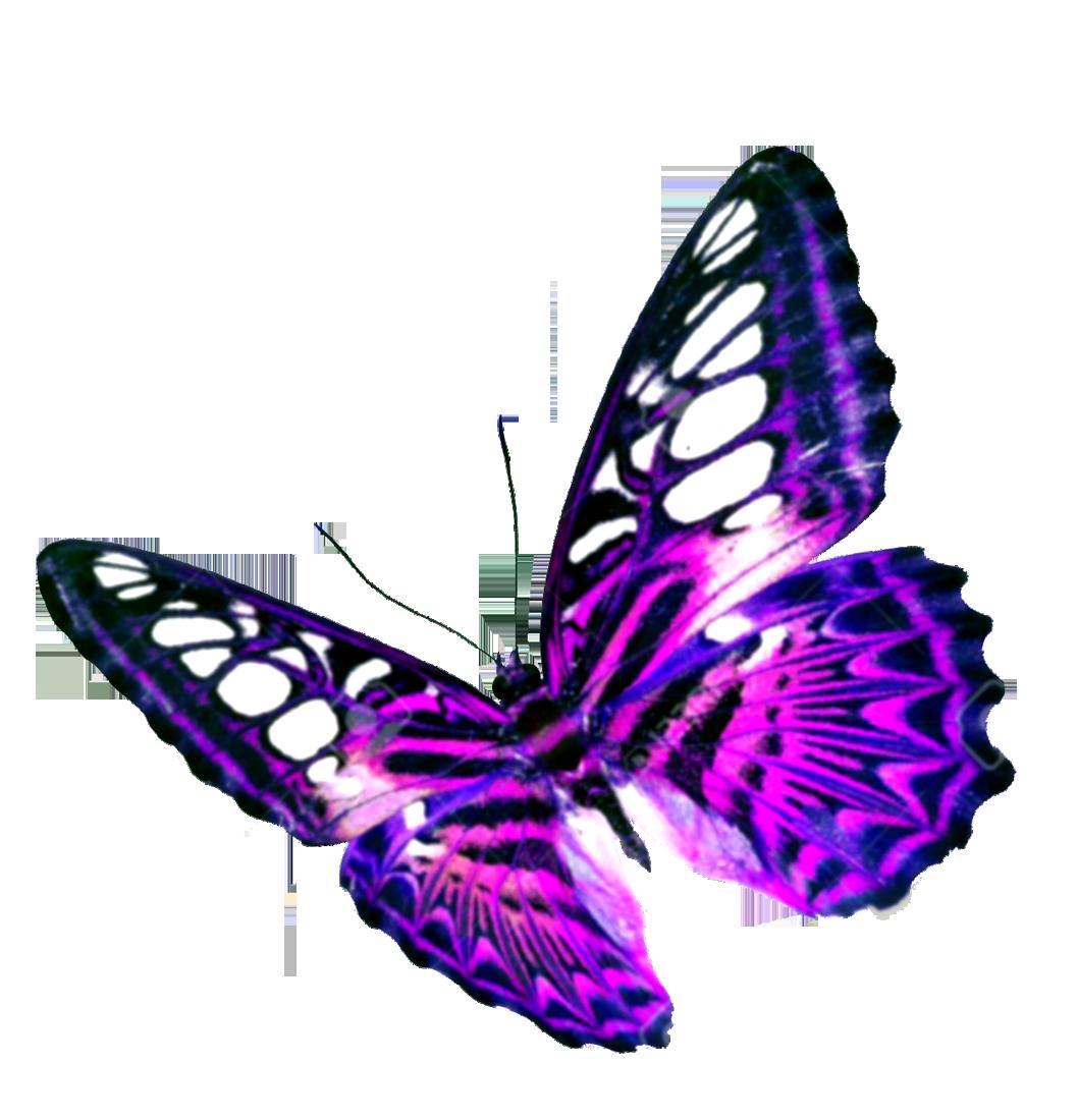 Purple Butterfly Transparent Background SVG Clip arts