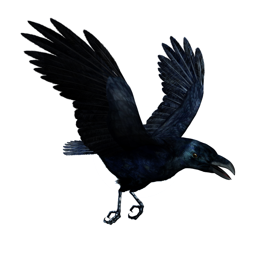 Raven Flying PNG HD SVG Clip arts