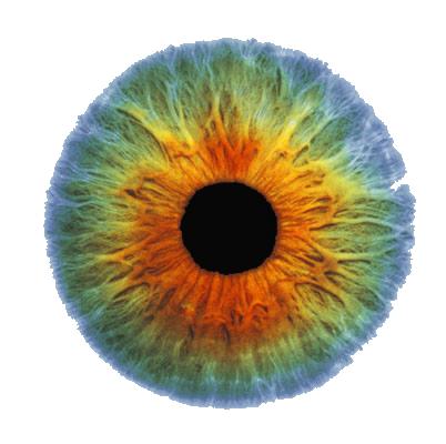 Real Eye PNG Image SVG Clip arts