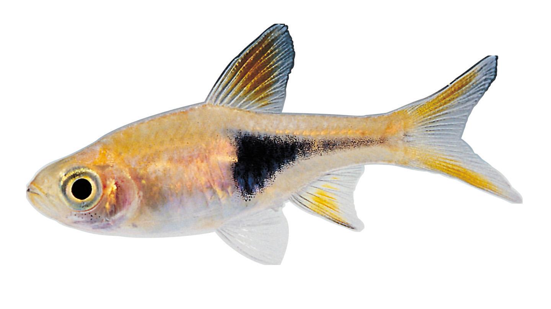 Real Fish PNG HD SVG Clip arts