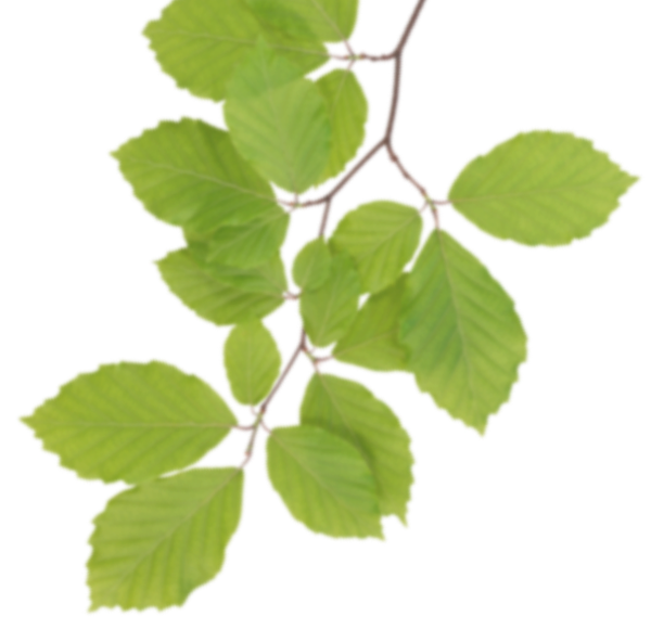 Real Leaves PNG Clipart SVG Clip arts