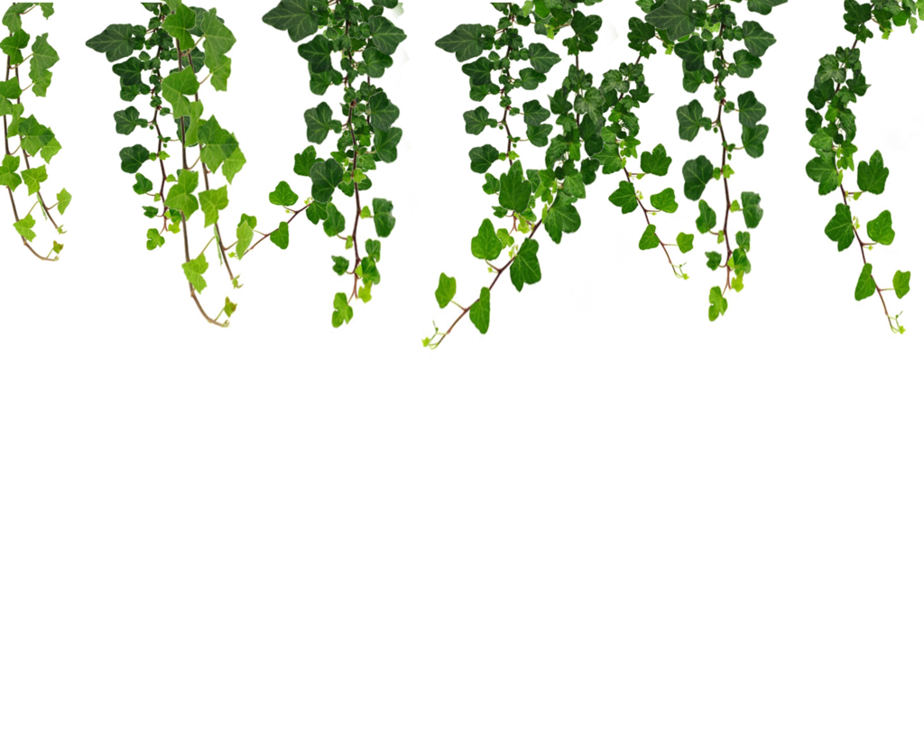 Real Leaves PNG File SVG Clip arts