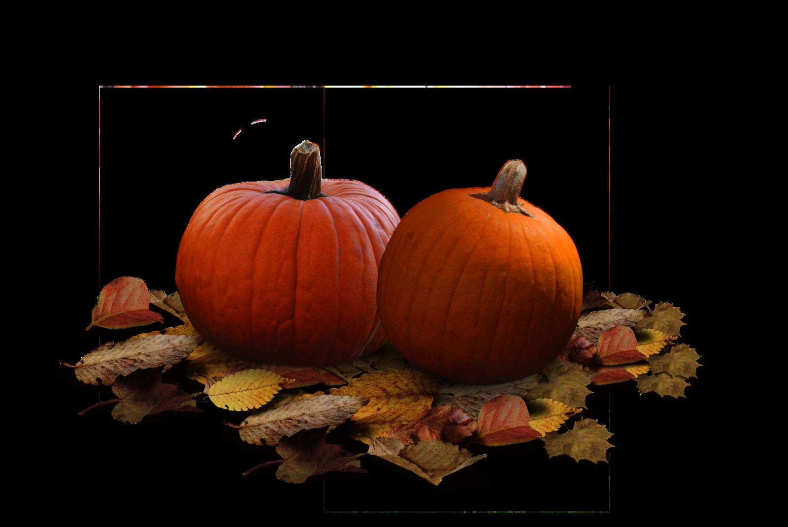 Real Pumpkin PNG Clipart SVG Clip arts