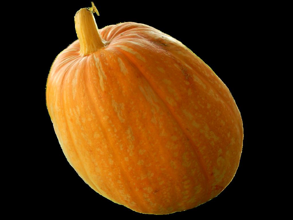 Real Pumpkin PNG Transparent Image SVG Clip arts