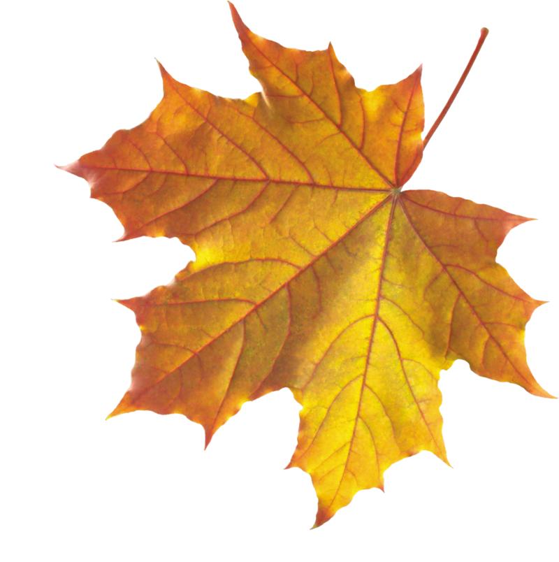 Realistic Autumn Fall Leaves PNG SVG Clip arts