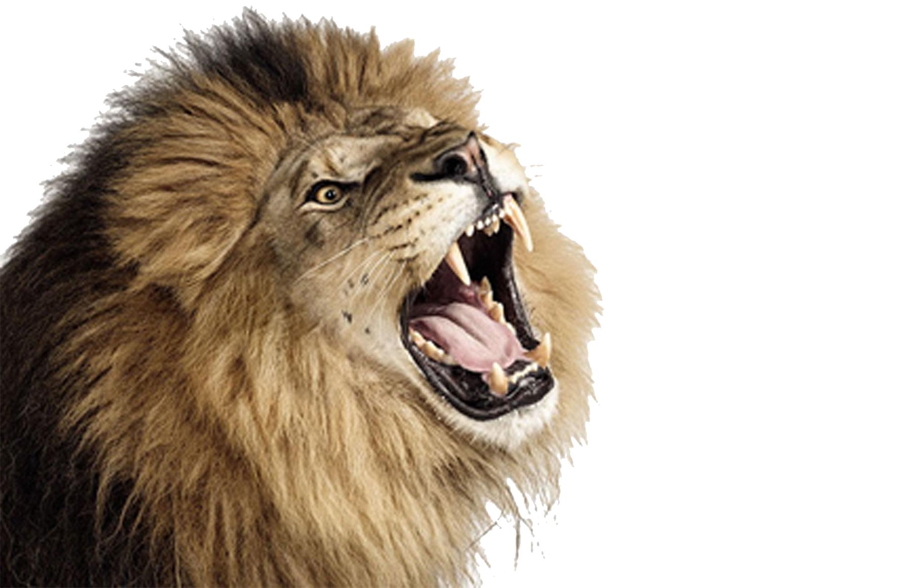Roaring Lion PNG Photos SVG Clip arts