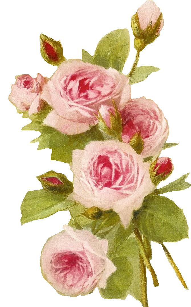 Romantic Pink Flower Border PNG Transparent SVG Clip arts