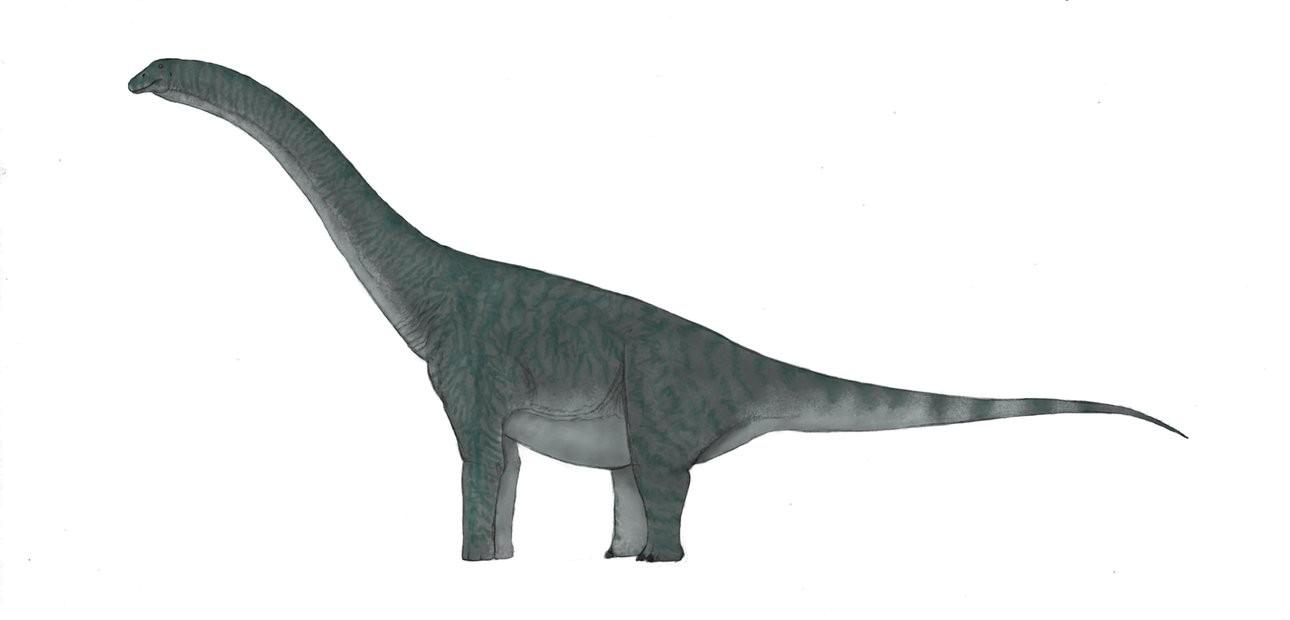 Sauropod Background PNG SVG Clip arts