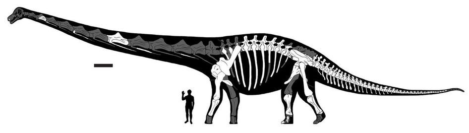 Sauropod PNG HD SVG Clip arts
