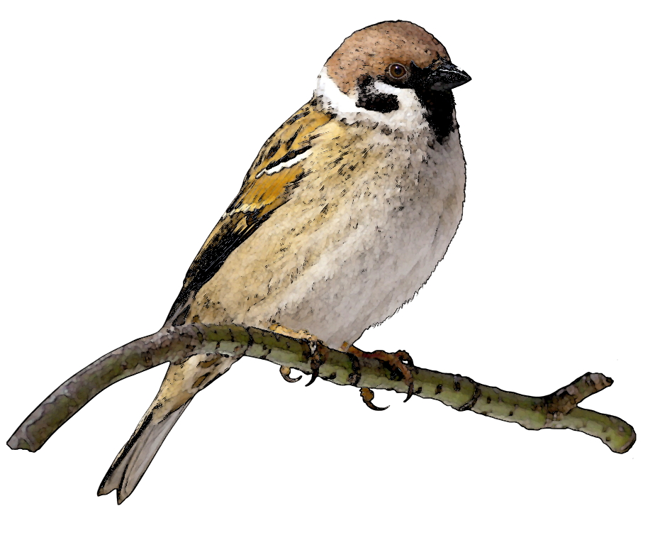 Sparrow PNG File SVG Clip arts
