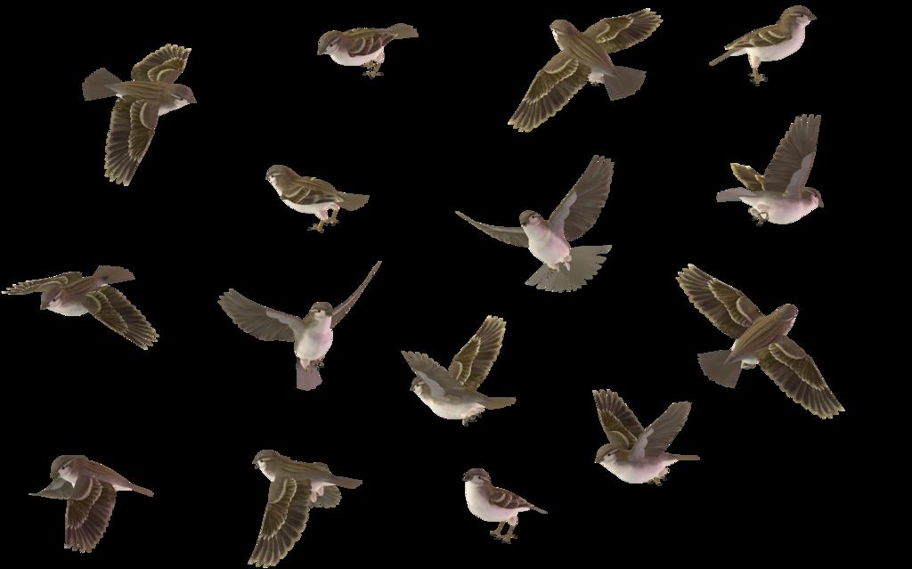 Sparrow PNG Image SVG Clip arts