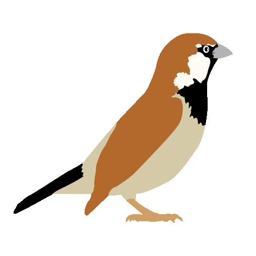 Sparrow Transparent PNG SVG Clip arts