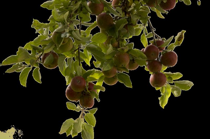Tree Branch PNG Photos SVG Clip arts
