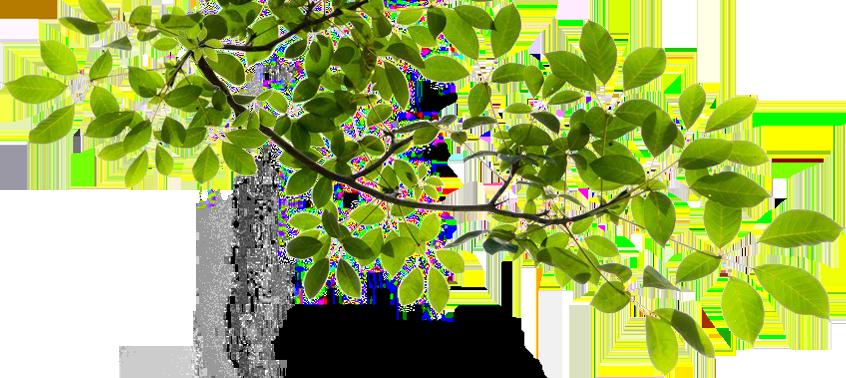 Tree Branch Transparent PNG SVG Clip arts