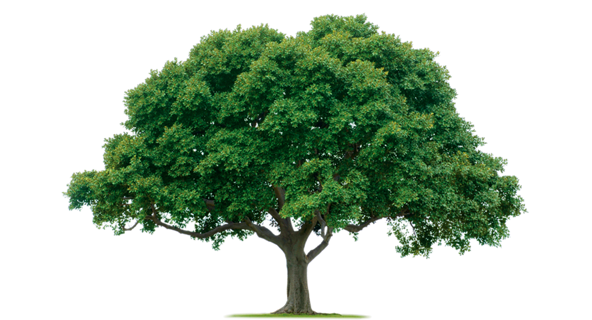Tree PNG Photos SVG Clip arts