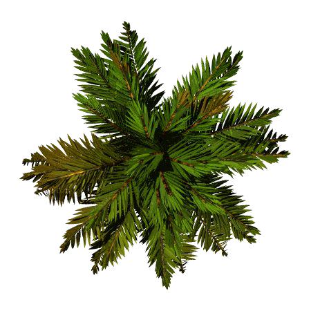 Tree Top PNG File SVG Clip arts