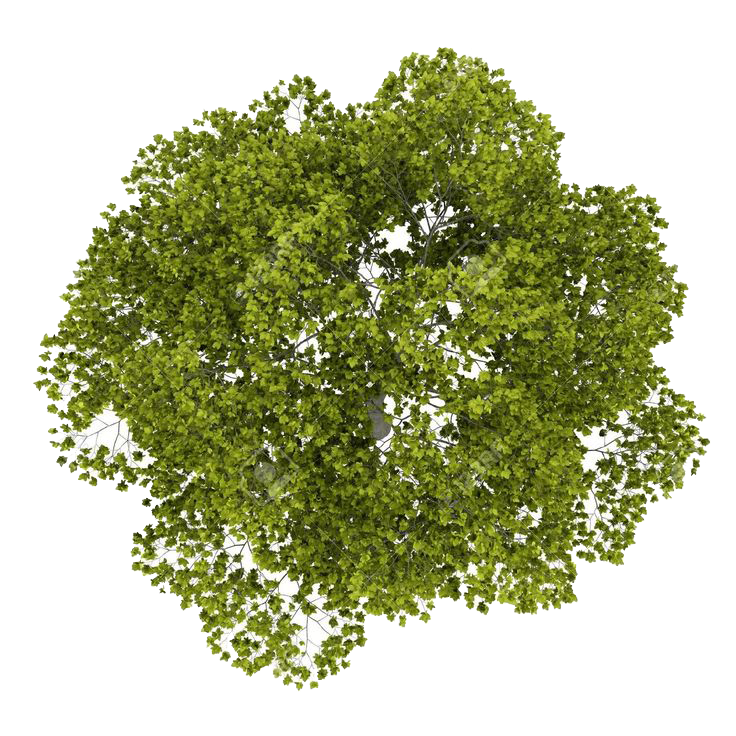 Tree Top PNG Image SVG Clip arts