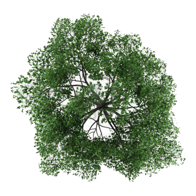Tree Top PNG Photos SVG Clip arts