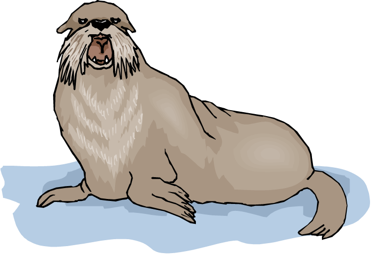 Walrus Background PNG PNG file