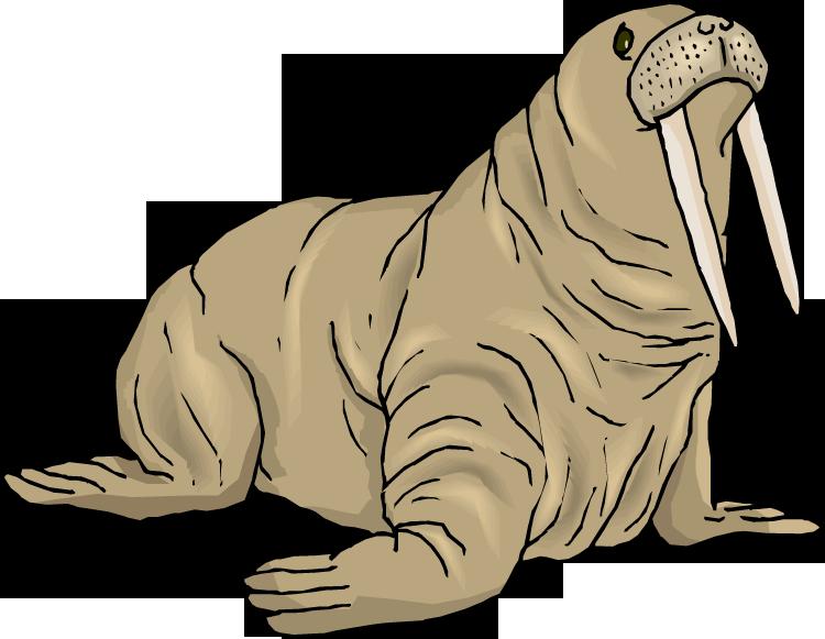 Walrus PNG Background Image SVG Clip arts