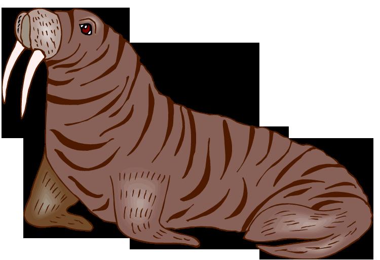 Walrus PNG Transparent HD Photo SVG Clip arts