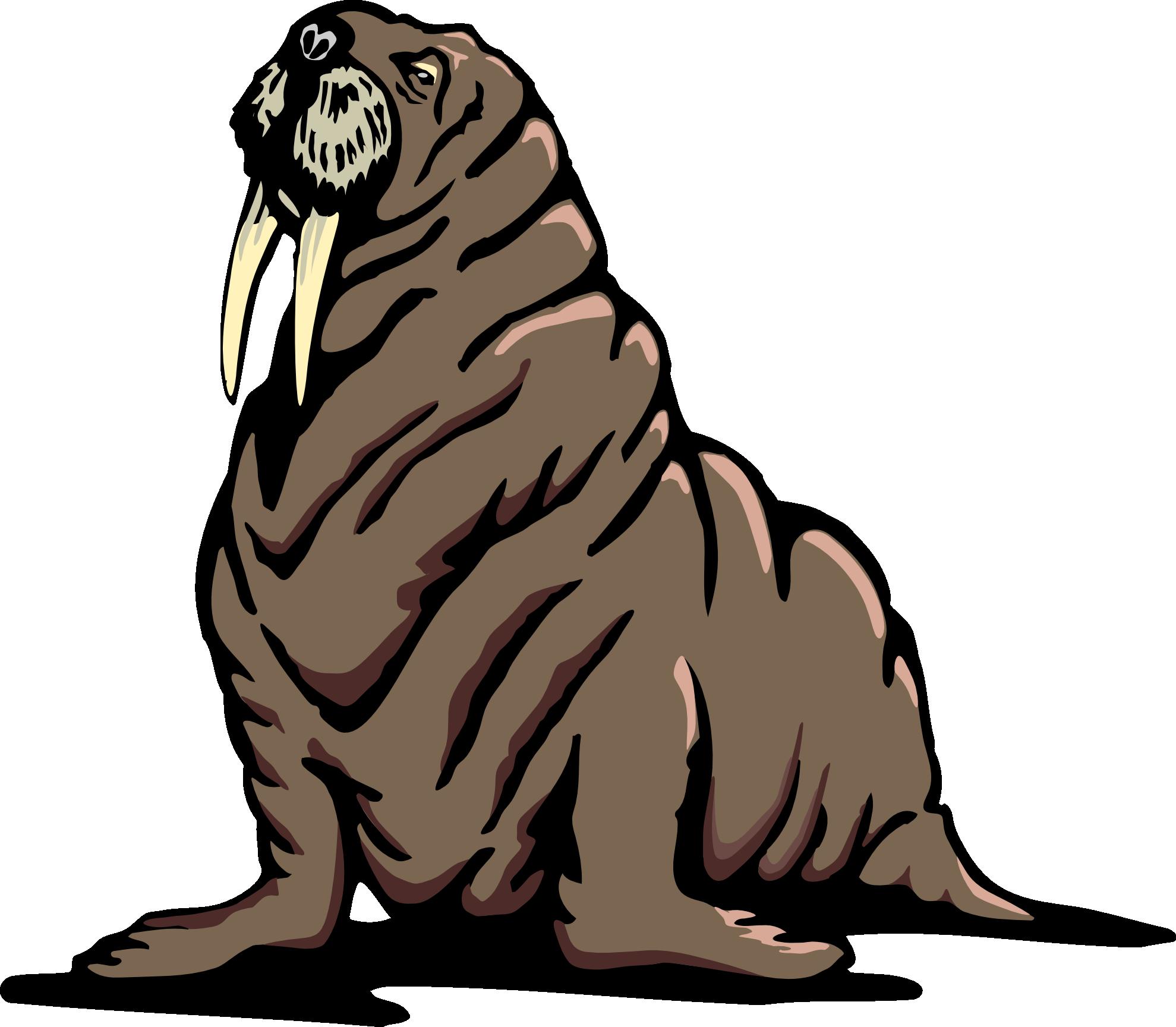Walrus Transparent PNG SVG Clip arts