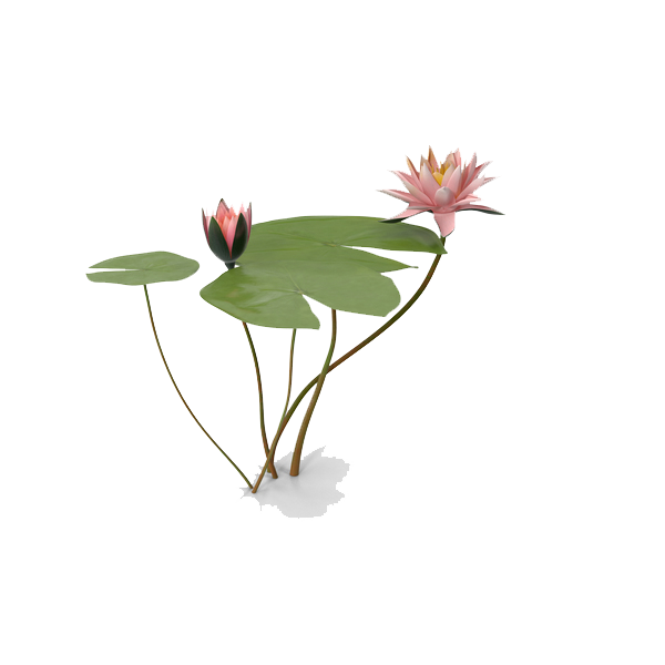 Water Lily PNG Photo SVG Clip arts