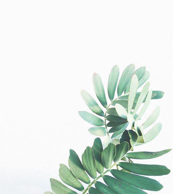 Watercolor Leaves Transparent Background SVG Clip arts