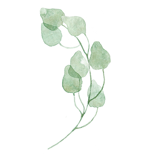 Watercolor Leaves Transparent PNG SVG Clip arts