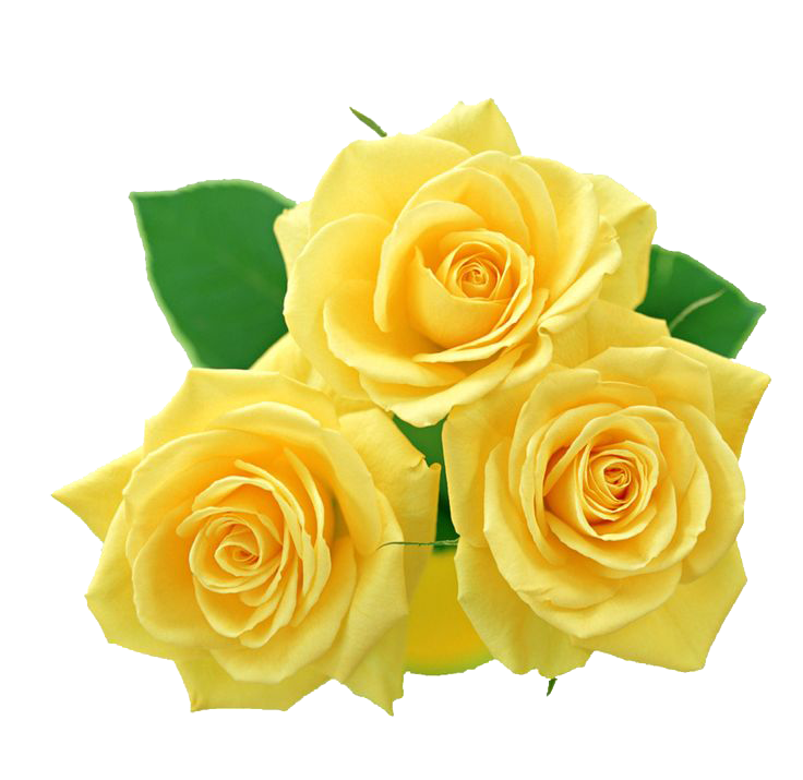 Yellow Flowers Bouquet PNG File SVG Clip arts