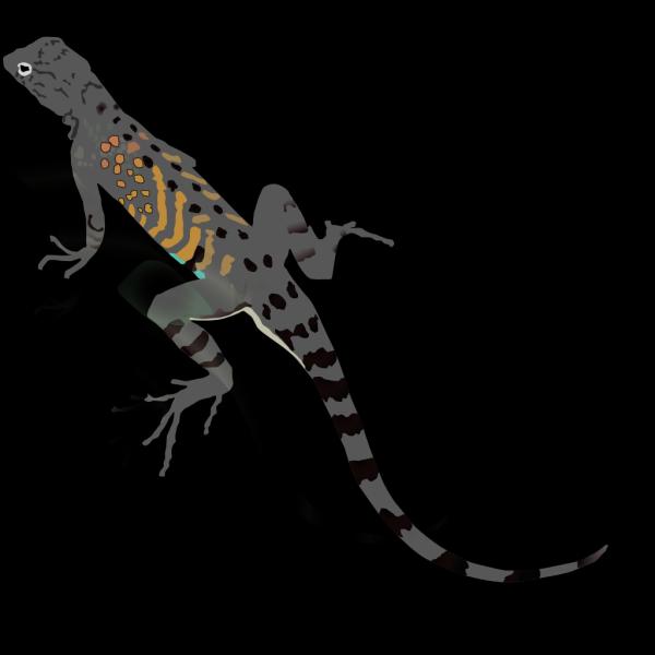 Az-lizard PNG Clip art