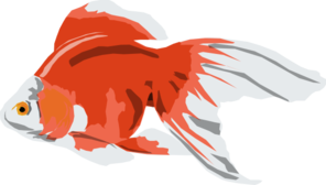 Goldfish Digital Art PNG images