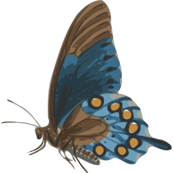 Simple Butterfly Wallpaper PNG Clip art