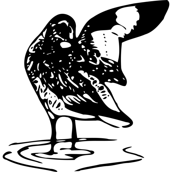 Willet PNG Clip art