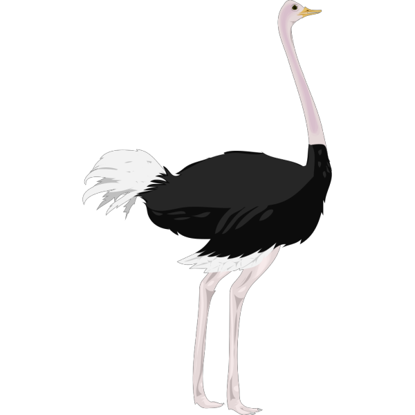 Ostrich PNG images