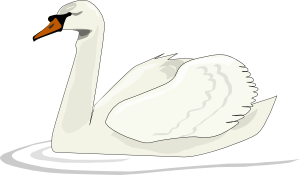 Swan Swimming PNG images