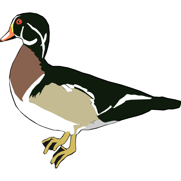 Green And White Duck PNG Clip art