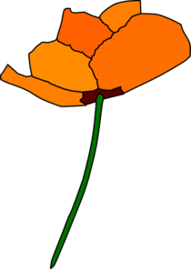 California Poppy PNG images