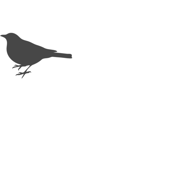 Bird Outline Gray PNG Clip art