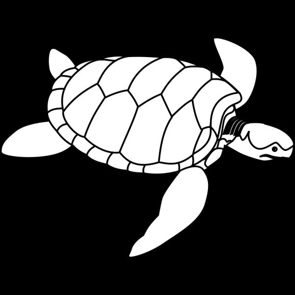 Turtle Outline PNG Clip art