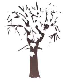 Group Of Trees PNG images