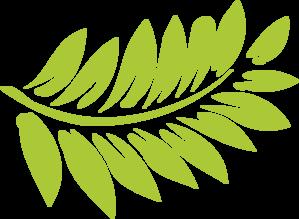 Fern Plant PNG Clip art
