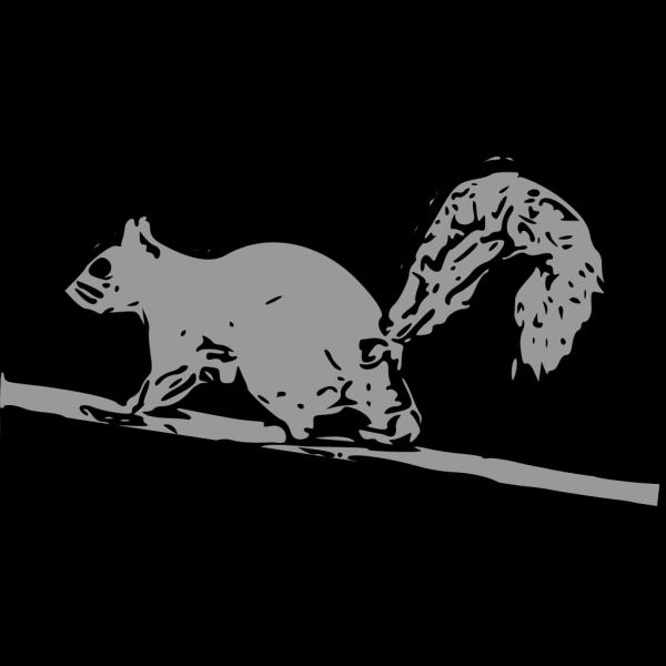 Squirrel PNG Clip art