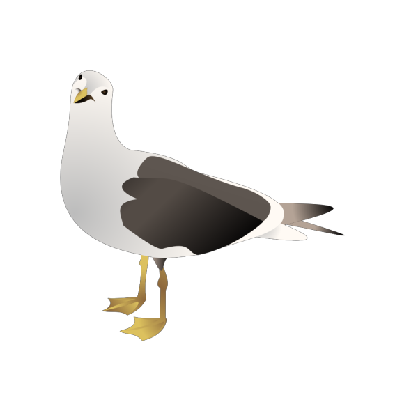 Gull PNG images
